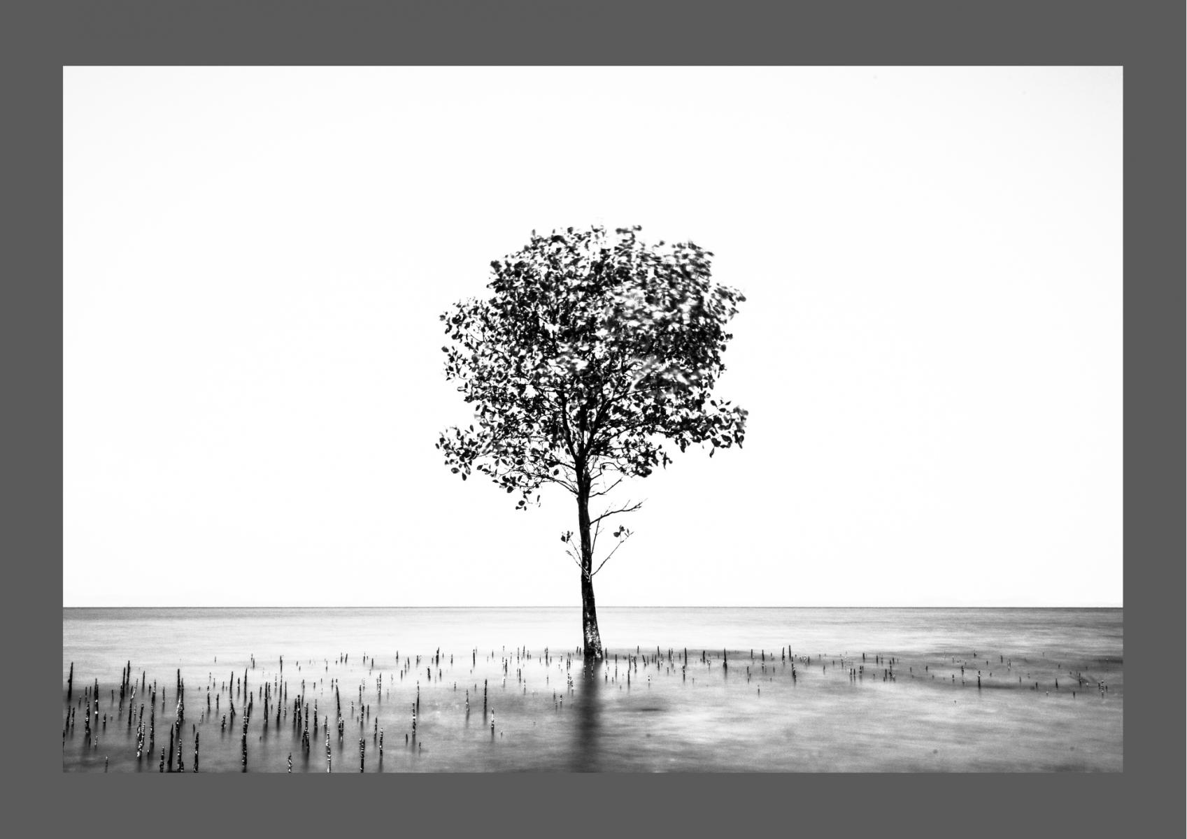 Alla ricerca della semplicità